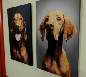 foto acustica per animali (2)